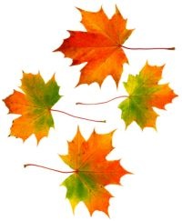 4autumnleaves2_2